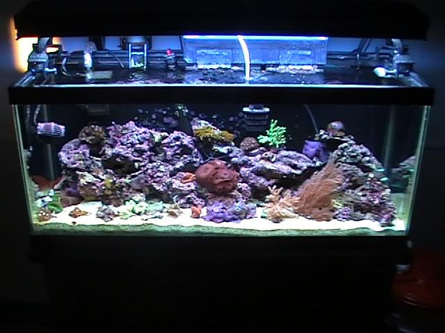 30 gal long reef tank Mytank2-2510014