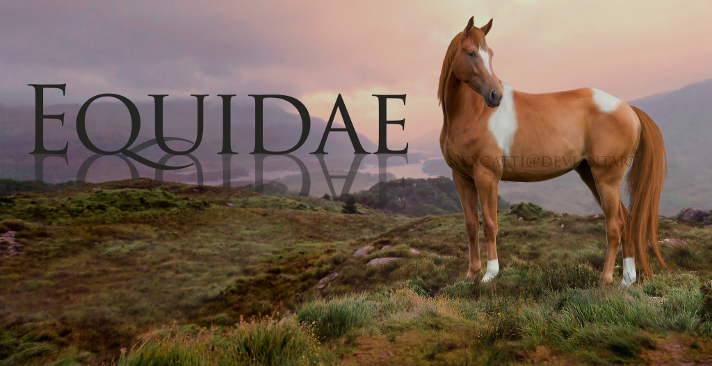 Equidae: Active Wild Horse RP [LINK-BACK] Advertisement_zpsd1a0730e