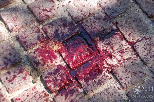 Zombie Walk Strasbourg 10 Septembre 2011 307192_232242296826065_100816293302000_704537_1659992411_n