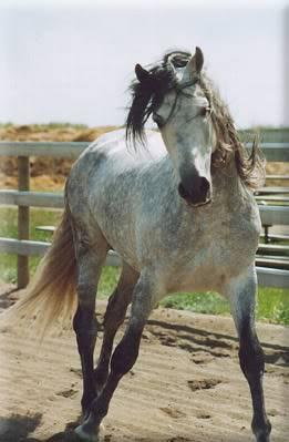 Princey's Horse Bios. C71f24ed