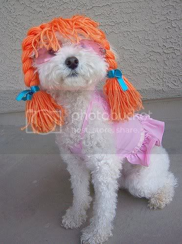 Funny Gou Gou photo - Page 3 PoodlesloveToPlayDressUp