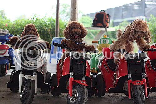Funny Gou Gou photo - Page 2 Ap_20081106022122154jpg