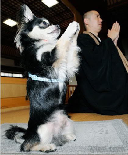 Funny Gou Gou photo Praying-dog
