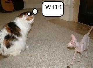 WTF !!!!!!!! AlienCat