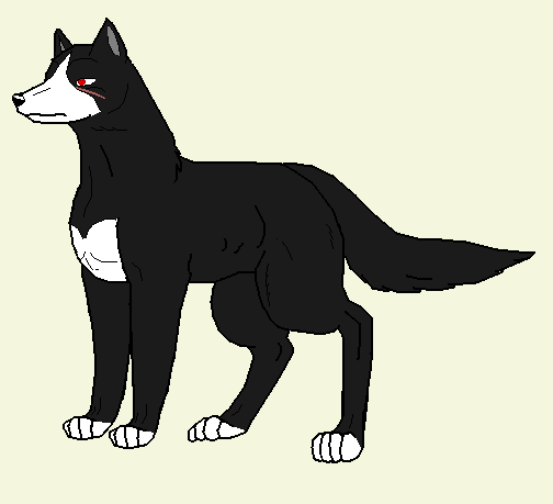 Alle Wolter's hunde Itachi_wolter