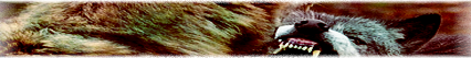 Storm Point Pack Forumguidelinesbannerv2
