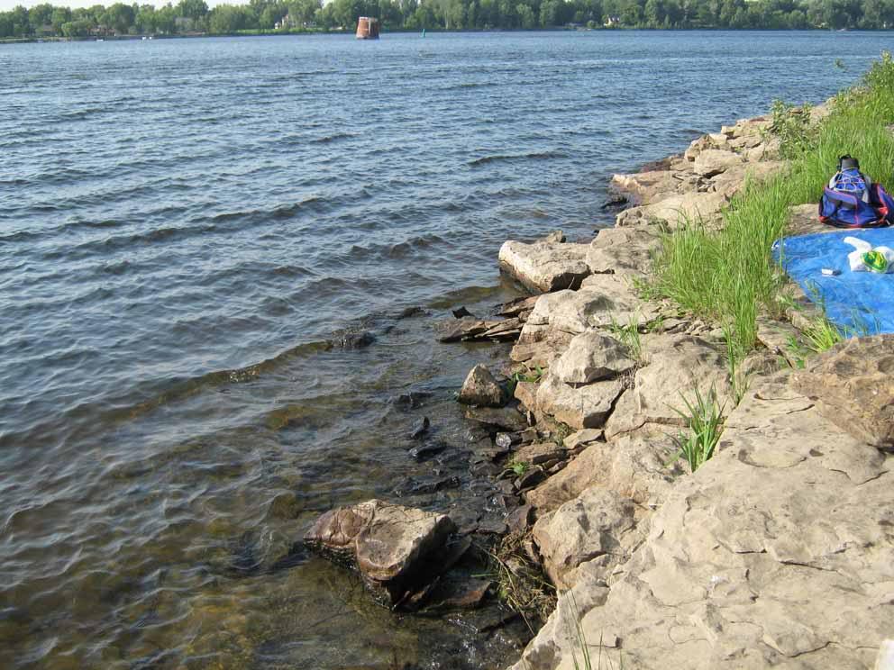 Plongée sur la Rivière des Outaouais - 5 Juillet 2010 Duck5JUIL2010I