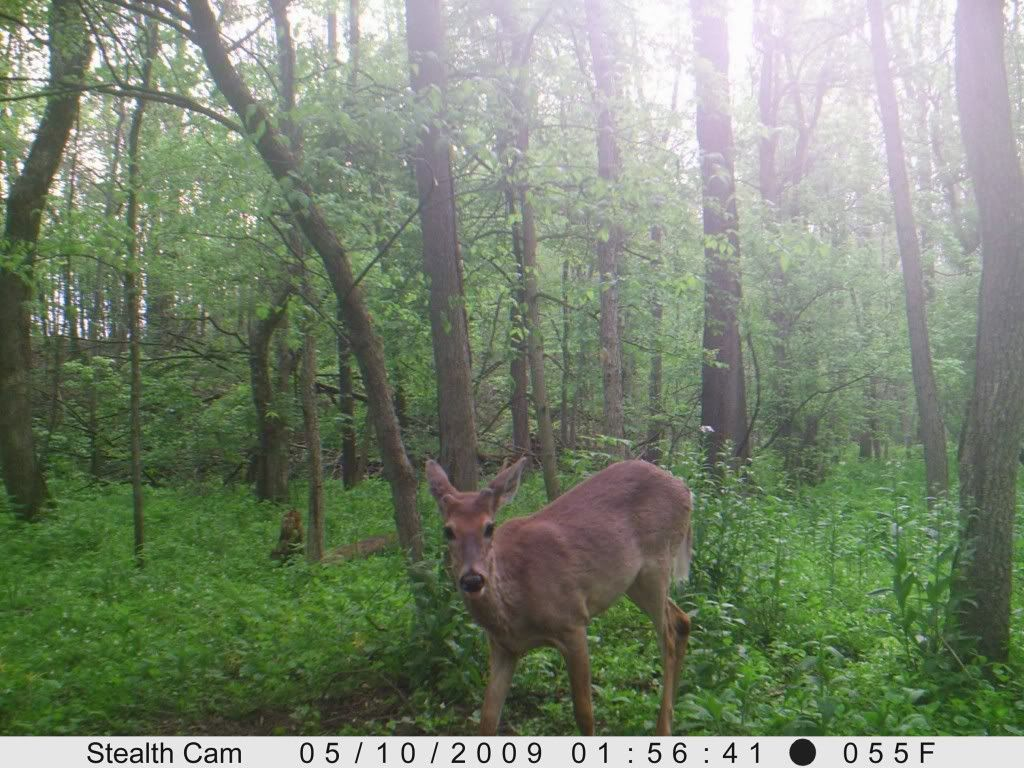 Product Review: Stealth Cam Prowler Trailcambuck