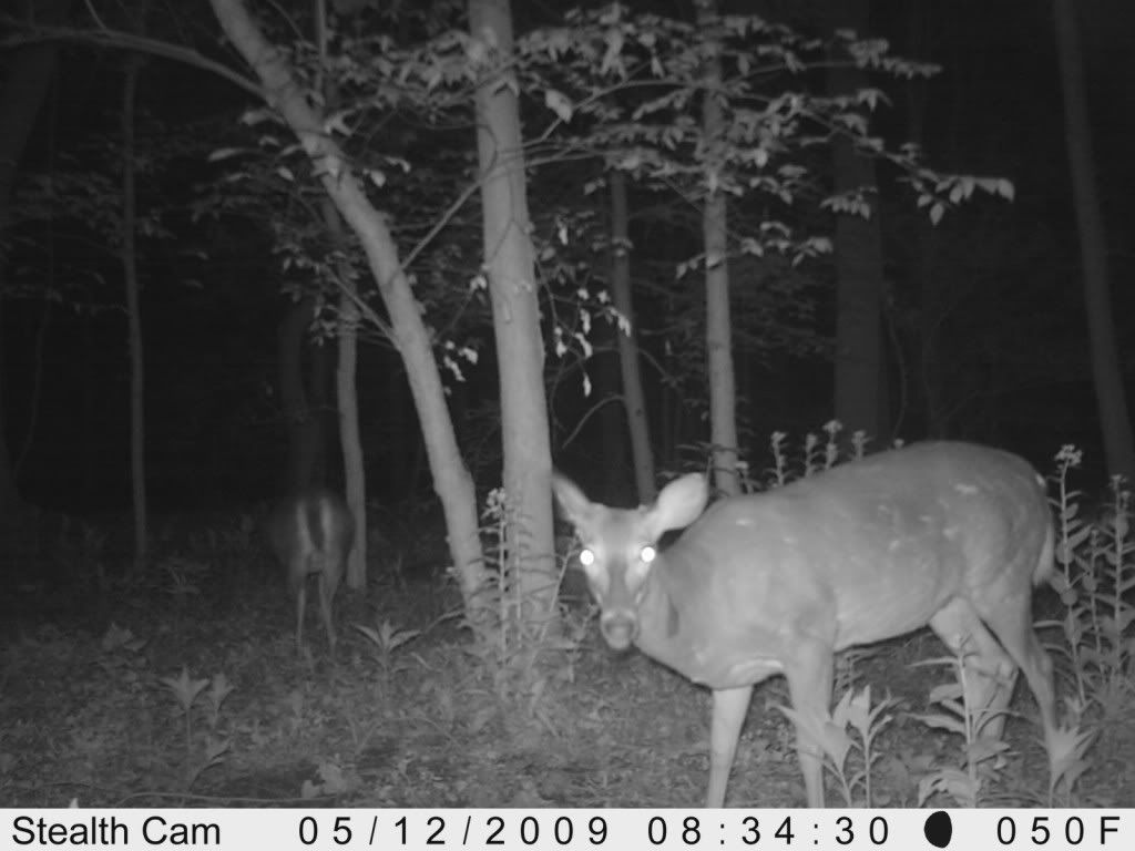 Product Review: Stealth Cam Prowler Trailcamnight