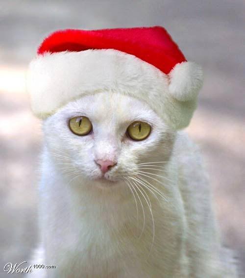 Tsubaki Ran KucingnyaElli