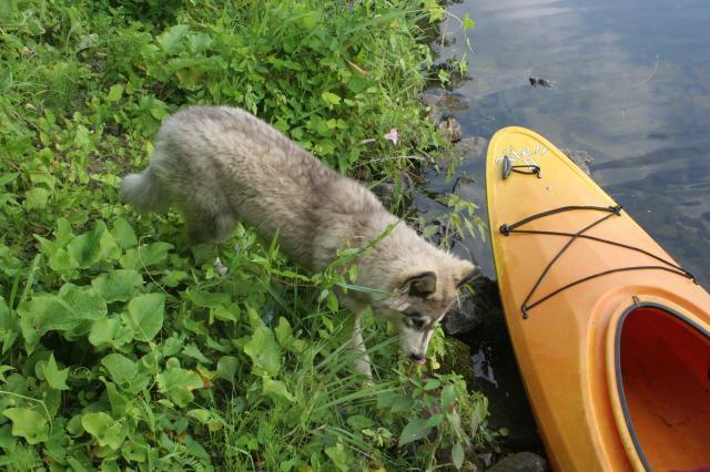 First time kayaking IMG_1234_zps5802cf38