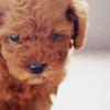 Wu Yue Xin - Poor Life [ U.C. ] Puppy_b19