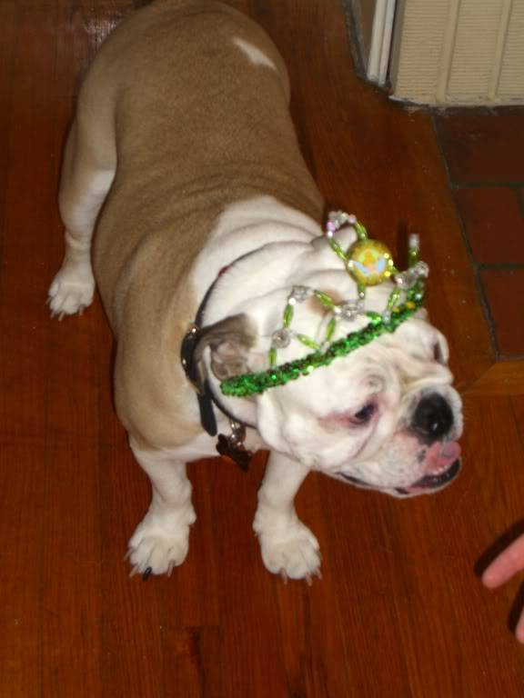 Pics of my two bulldogs Picture019