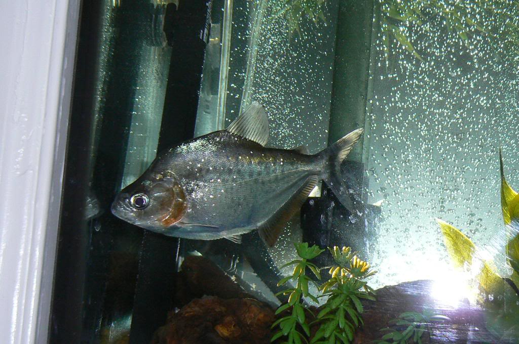 pics of my fish Picture452