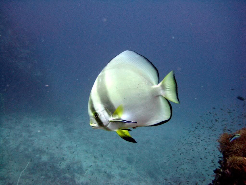 SCUBA diving in the gulf of Thailand (pics) IMG_0358
