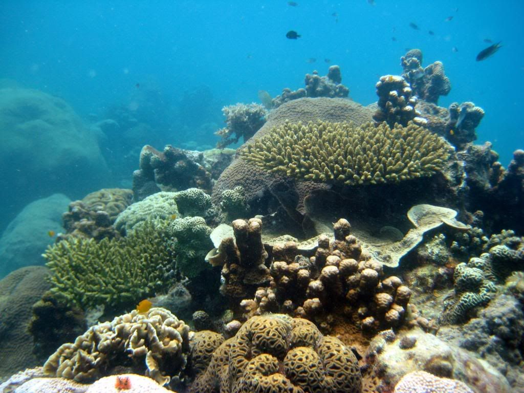 SCUBA diving in the gulf of Thailand (pics) IMG_0421