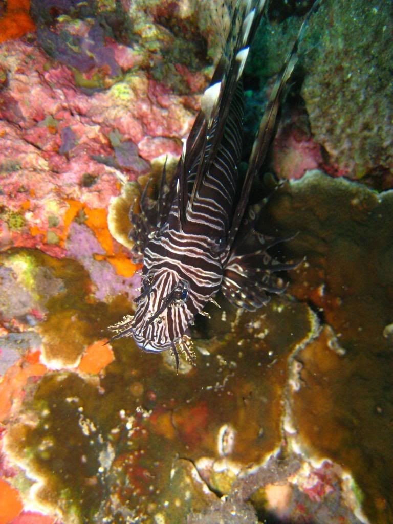 SCUBA diving in the gulf of Thailand (pics) IMG_0468