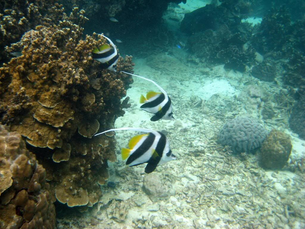 SCUBA diving in the gulf of Thailand (pics) IMG_1032