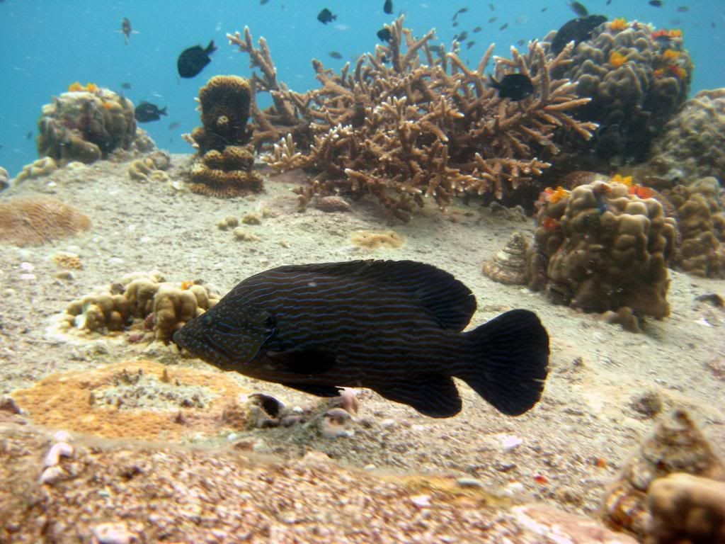 SCUBA diving in the gulf of Thailand (pics) IMG_1251