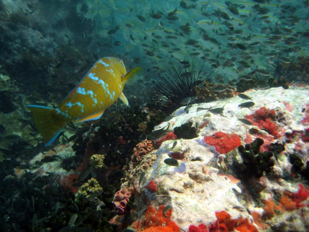 SCUBA diving in the gulf of Thailand (pics) IMG_2027