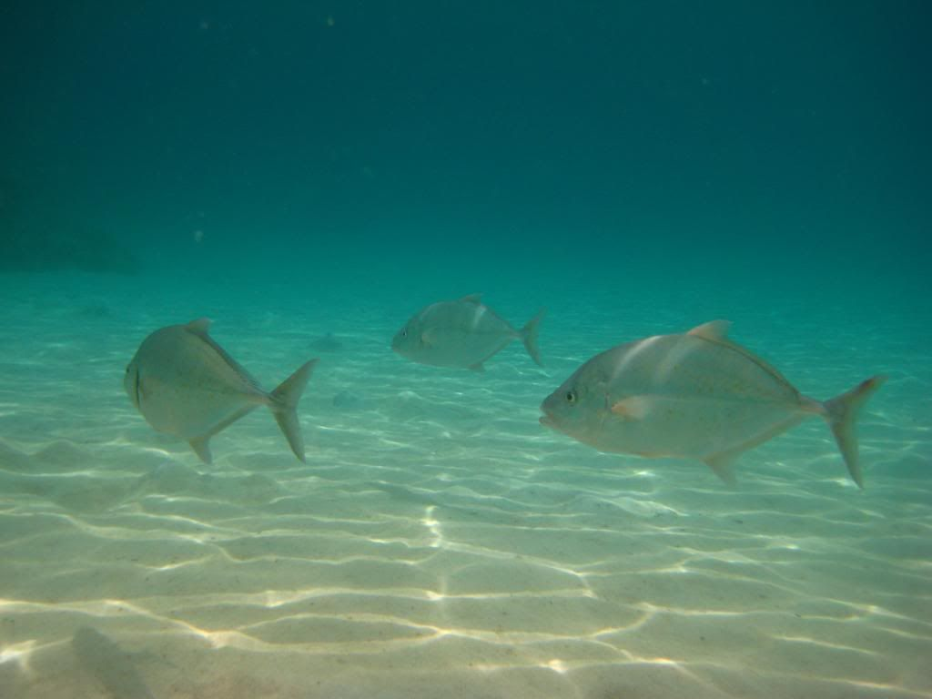 SCUBA diving in the gulf of Thailand (pics) IMG_4033