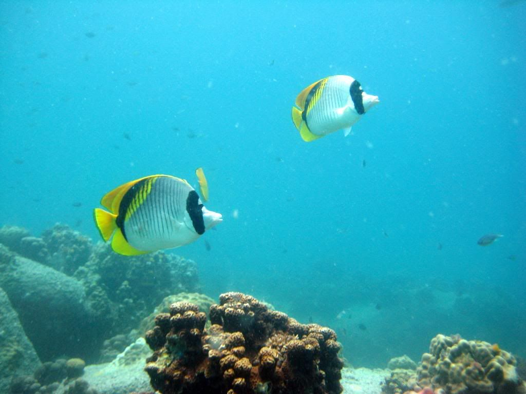 SCUBA diving in the gulf of Thailand (pics) IMG_6272