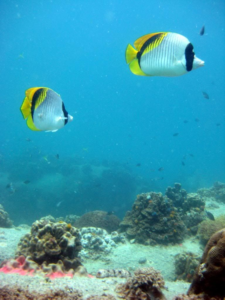 SCUBA diving in the gulf of Thailand (pics) IMG_6273