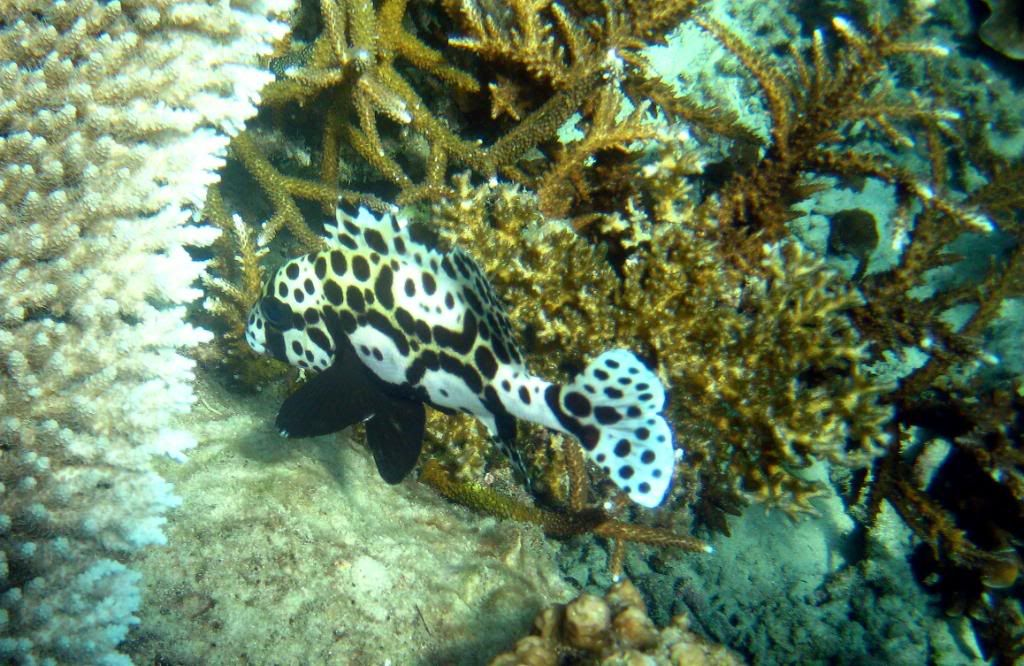 SCUBA diving in the gulf of Thailand (pics) IMG_7643