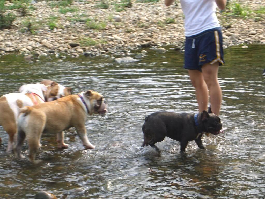 Pics of my two bulldogs CIMG1346