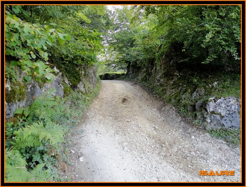Bosque de Artea y Cueva de los Cristinos (Urbasa) DSC02598