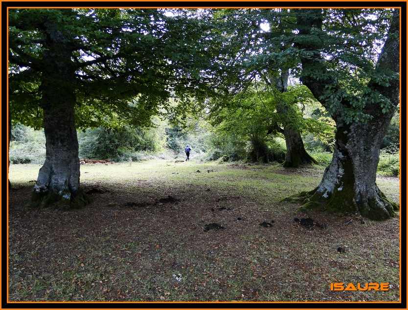Bosque de Artea y Cueva de los Cristinos (Urbasa) DSC02602