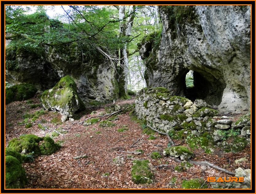Bosque de Artea y Cueva de los Cristinos (Urbasa) DSC02610