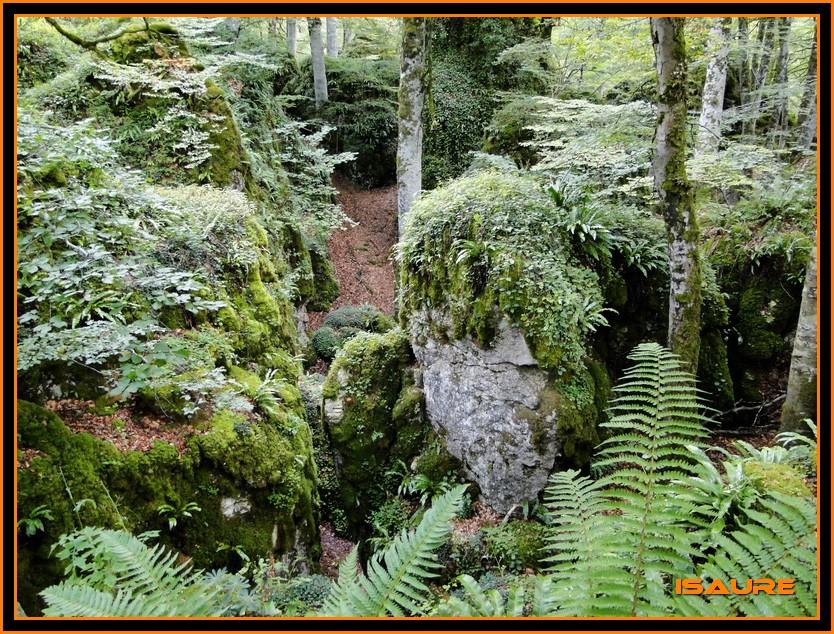 Bosque de Artea y Cueva de los Cristinos (Urbasa) DSC02612
