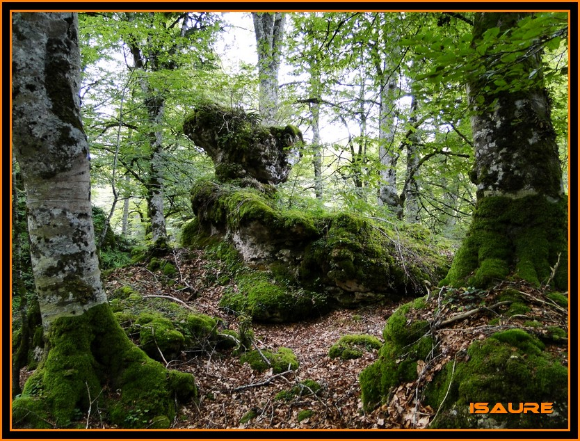 Bosque de Artea y Cueva de los Cristinos (Urbasa) DSC02613
