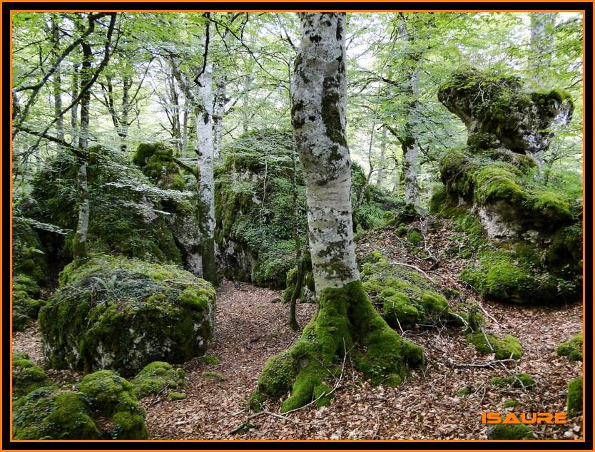Bosque de Artea y Cueva de los Cristinos (Urbasa) DSC02614