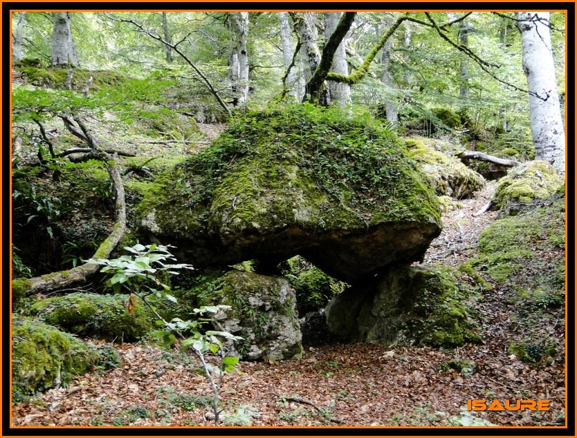 Bosque de Artea y Cueva de los Cristinos (Urbasa) DSC02615