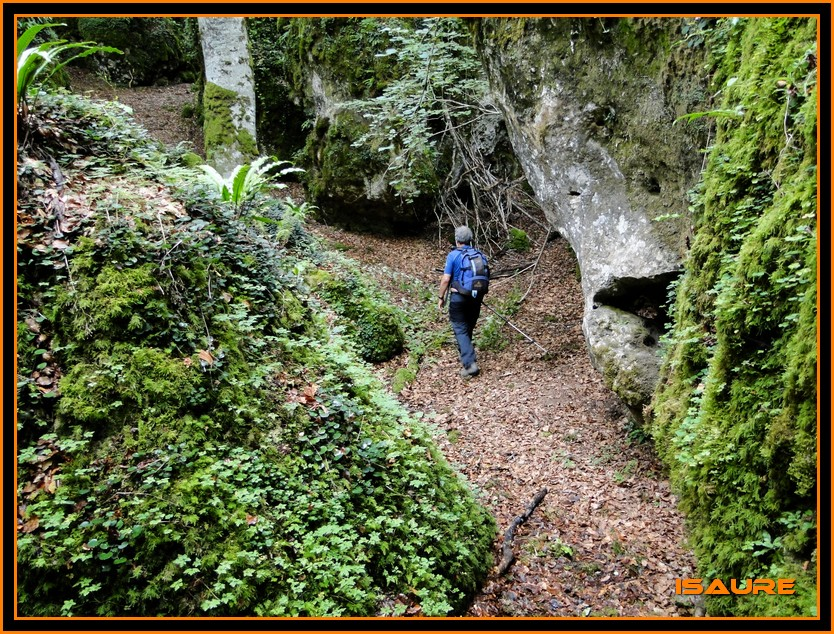 Bosque de Artea y Cueva de los Cristinos (Urbasa) DSC02618