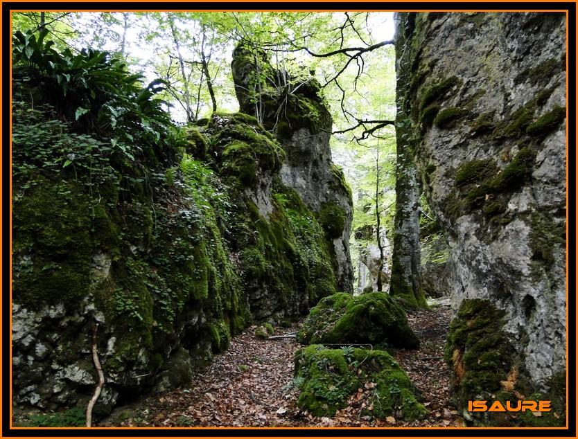 Bosque de Artea y Cueva de los Cristinos (Urbasa) DSC02621