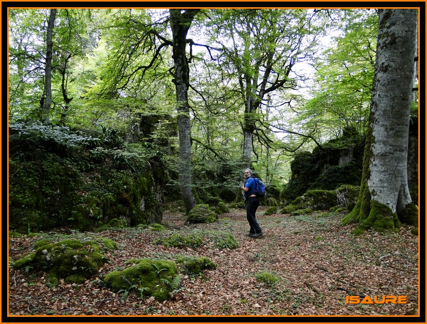 Bosque de Artea y Cueva de los Cristinos (Urbasa) DSC02625