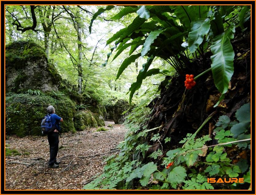Bosque de Artea y Cueva de los Cristinos (Urbasa) DSC02626