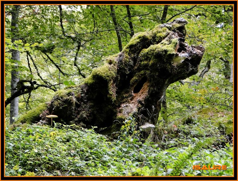 Bosque de Artea y Cueva de los Cristinos (Urbasa) DSC02627