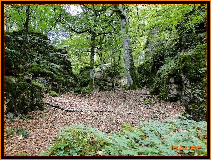 Bosque de Artea y Cueva de los Cristinos (Urbasa) DSC02628