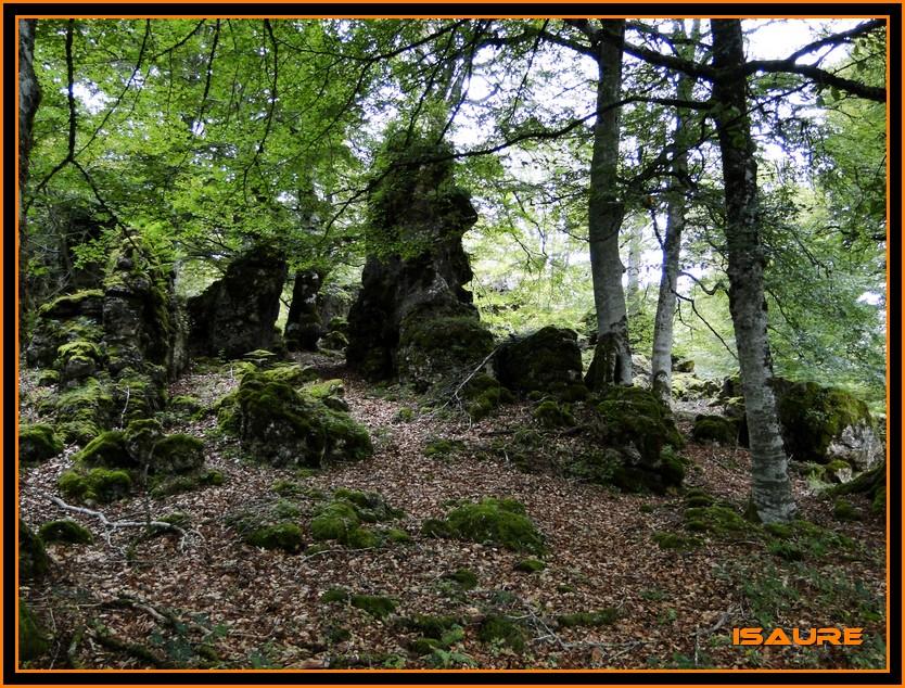Bosque de Artea y Cueva de los Cristinos (Urbasa) DSC02629