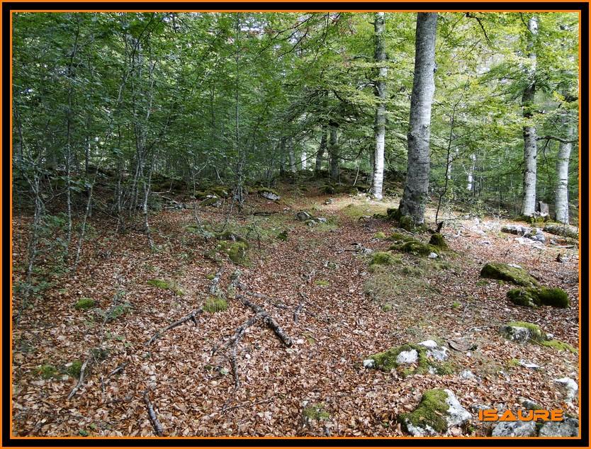 Bosque de Artea y Cueva de los Cristinos (Urbasa) DSC02710
