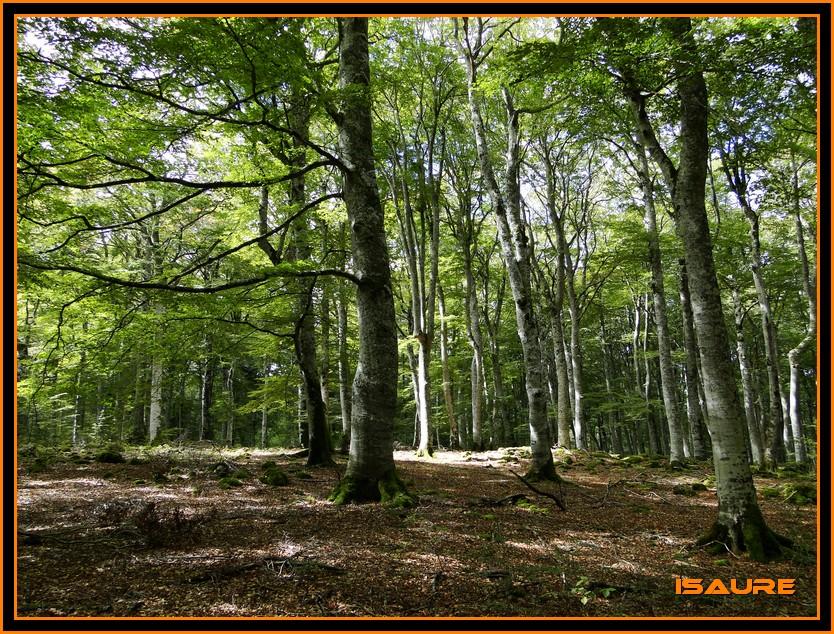 Bosque de Artea y Cueva de los Cristinos (Urbasa) DSC02711