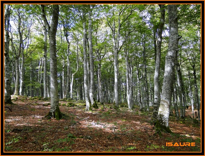 Bosque de Artea y Cueva de los Cristinos (Urbasa) DSC02712
