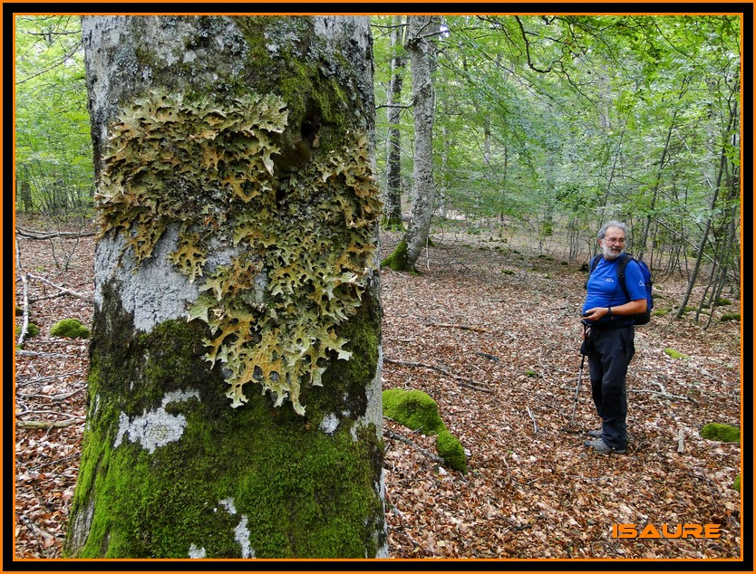 Bosque de Artea y Cueva de los Cristinos (Urbasa) DSC02713