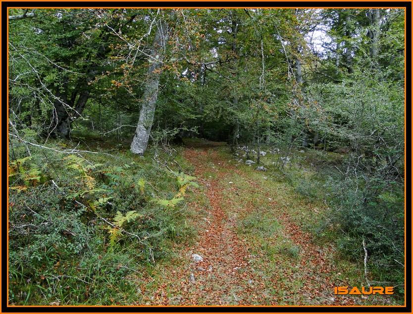 Bosque de Artea y Cueva de los Cristinos (Urbasa) DSC02716
