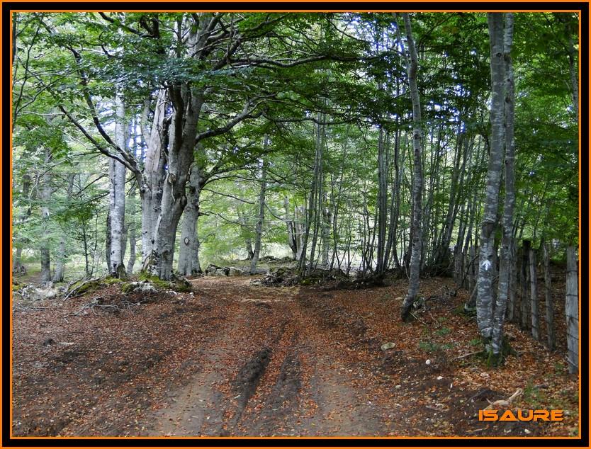 Bosque de Artea y Cueva de los Cristinos (Urbasa) DSC02718