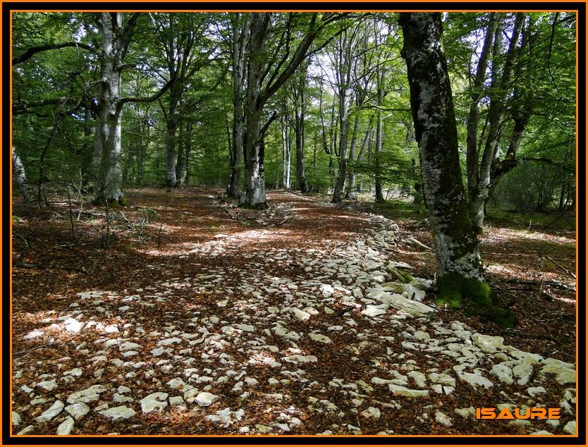 Bosque de Artea y Cueva de los Cristinos (Urbasa) DSC02722
